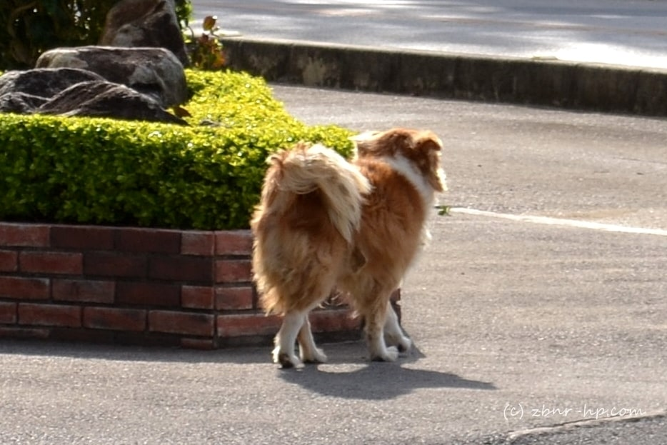 宮古島は野良犬天国。捨て犬の問題